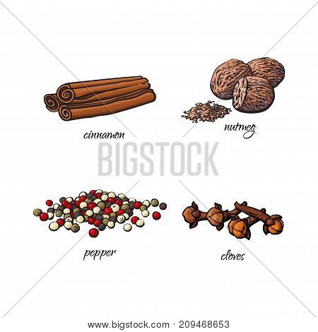 vector flat cartoon sketch hand drawn Spices, seasoning, flavorings and kitchen herbs set. Dry cinnamon, canella sticks, cloves black pepper and nutmeg. Isolated illustration on a white background