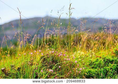 Closeup Of Shot Wild Growing Plants