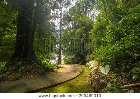 Pavement in the jungle green foliage in thailand