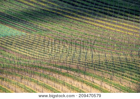 Spring wineyard landscape in southern moravia wine region