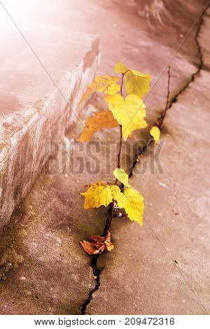 Seed growing through crack in pavement Ecology concept. Rising sprout on dry ground. Nature.
