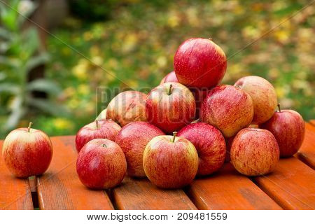 Red Apples on the Table in the Garden