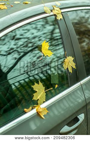 yellow autumn leaves on the glass of a parked car