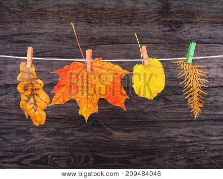 Autumn Leaves Of Maple, Oak, Linden On The Clothespin, As Card, Card