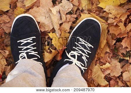 Male shoes view from above against the background of autumn foliage