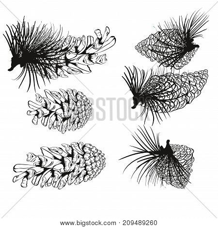 Pine Cone And Fir Tree Set. Botanical Hand Drawn Vector Illustration. Isolated Xmas Pinecones. Engra