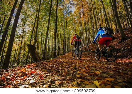 Cycling, mountain biker couple on cycle trail in autumn forest. Mountain biking in autumn landscape forest. Man and woman cycling uphill trail.