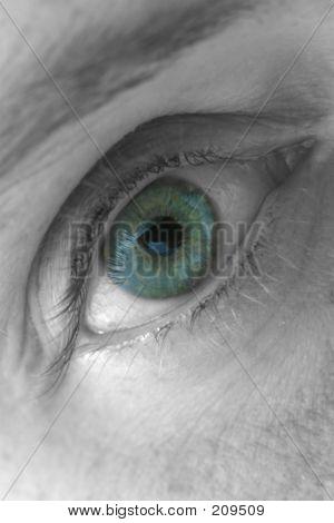 Blue Eye, Macro