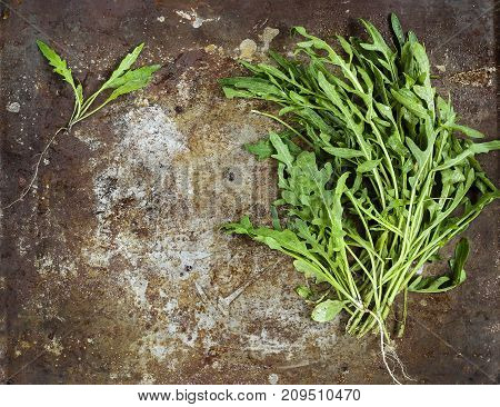 Bunch Of Fresh Arugula Leaves (ruccola, Rucola)