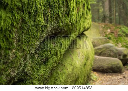 Huge rocks found directly in the forest