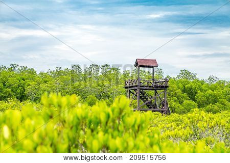 Observatory Tower At Mangrove Forest, Nature Trail