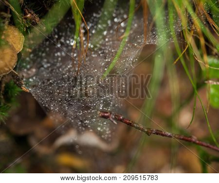 Spider web in the forest with rain drops