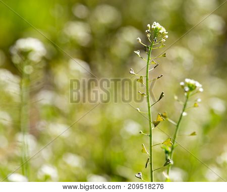 herbaceous plant in the desert . In the park in nature