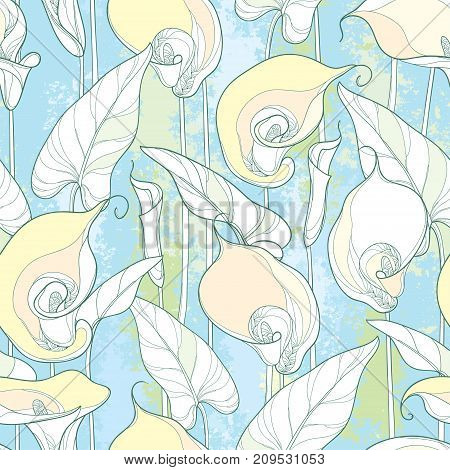 Vector seamless pattern with outline Calla lily or Zantedeschia. Ornate white flower, bud and leaves on the pastel colored background. Floral pattern in contour style with calla for summer design.