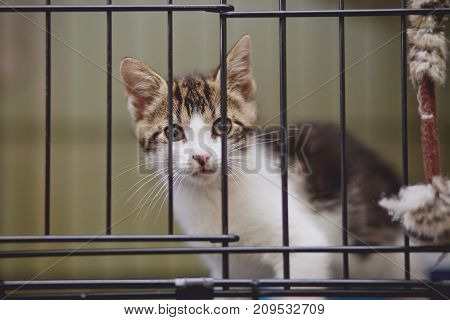 The kitten white with striped spots sits in a cage.