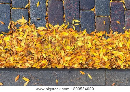 Yellow leaves on a stone street at the curb of the sidewalk in autumn