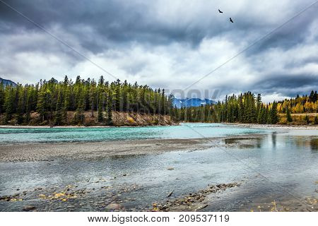 Coniferous green forests grow along the shores of a shallow river. Rocky Mountains of Canada. The concept of active and automobile tourism