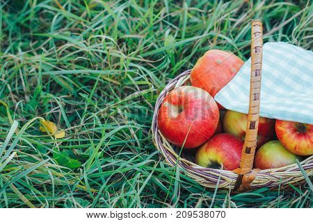 red apples on the grass in a basket