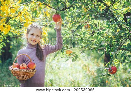 cute little girl is picking apples from a tree in a basket.