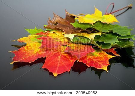 Abstract background of differently colored maple leaves. Magical autumn colors. Maple leaves and beautiful colors.
