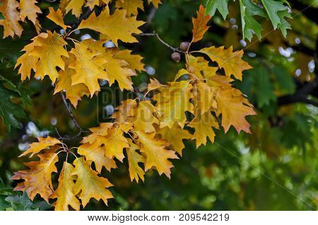 Natural background of autumnal leaves in Vrabnitsa district, Sofia, Bulgaria