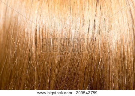 long blond hair as background . photo in the studio