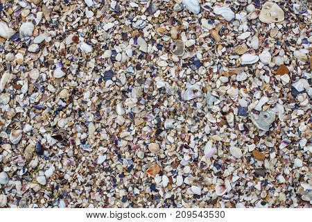 Multicolored Seashells On The Beach