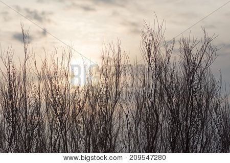 bare tree branches at dawn sun . In the park in nature