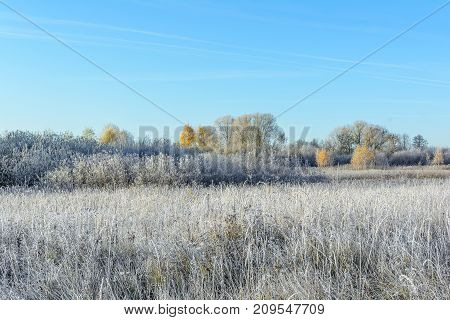 Autumn Autumn Frost first frost Forest Frost Frost In The Field Frost On The Grass Frost On The Leaves Frost On The Meadow Frost On The Trees Frozen Field Frozen Forest Frozen Meadow Grove Late Autumn Meadow Nature Trees
