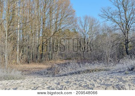 Autumn Autumn Frost Beach Sand In Frost first frost Forest Frost Frost On The Leaves Frost On The Trees Frozen Forest Grove Late Autumn Nature River Bank Shore