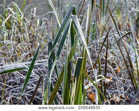Autumn Autumn Frost first frost Forest Frost Frost In The Field Frost On The Grass Frost On The Leaves Frost On The Meadow Frozen Field Frozen Forest Frozen Meadow Grove Late Autumn Meadow Nature