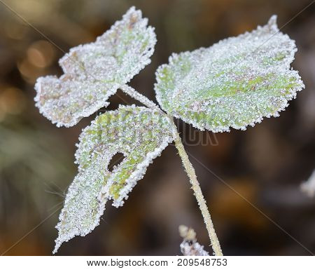 Autumn Autumn Frost first frost Forest Frost Frost On The Grass Frost On The Leaves Frost On The Trees Frozen Forest Frozen Leaves Grove Late Autumn Nature Trees