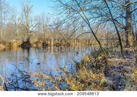 The Grass Frost On The Leaves Frost On The Plants Frozen Plant Frozen Pond Frozen River Late Autumn Nature River Bank Shore Thin Ice