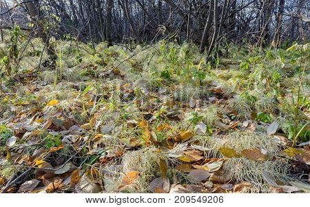 Autumn Autumn Frost first frost Frost Frost In The Forest Frost On The Grass Frost On The Leaves Late Autumn Nature