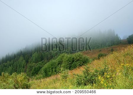 A foggy mist over a forest glade. In the foreground is a flowering meadow the tops of trees in the background are lost in the haze.