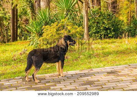 Stray dog standing on the pavement in the park