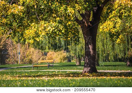 Season, Autumn, Wood Full Of Color Shades, Park, Bench Under The Tree, Sunny Autumn Day