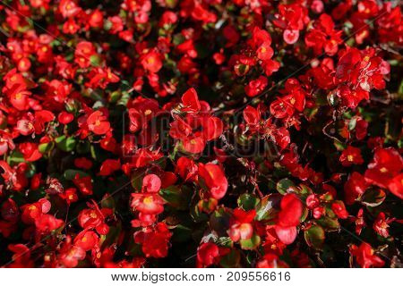 Background of flowers. Beautiful flowers as background