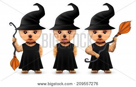 Funny cartoon animal witch posing with broom. Halloween and Dead day concept. Realistic 3D illustration.
