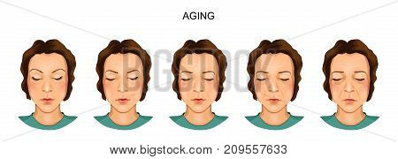 vector illustration of a model of the ageing female face
