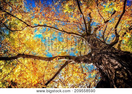 colorful leafs on a tree at autumn