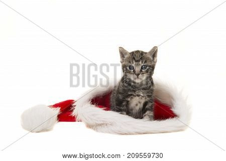 Cute tabby baby cat sitting in santa's hat isolated on a white background