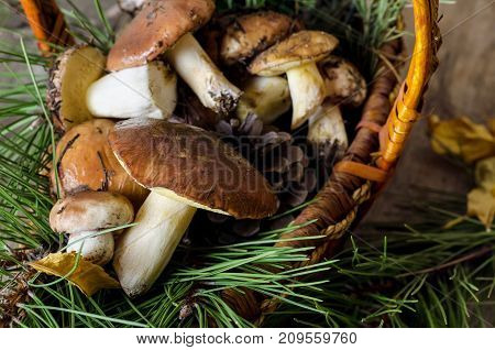 Mushroom greasers on dark wooden background. Close up.