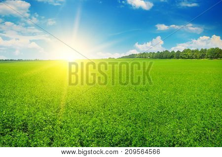 field and sun rise in the blue sky