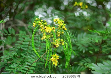 The Yellow Wild Flower On Green Nature Background
