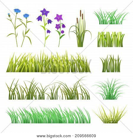 Vector green grass herb and flowers nature isolated on white background design template elements illustration. Summer grass texture land season natural grassy plants.