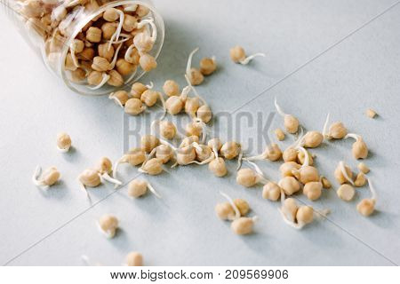 Chick pea sprouts over blue paper background