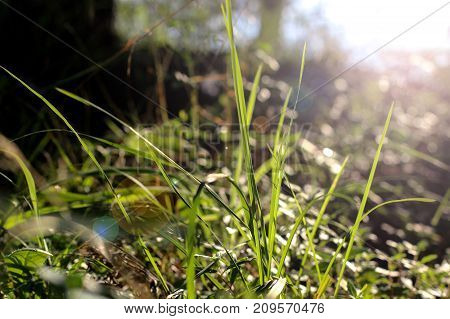 the grass in the sun, plants in the Park, thin sheets, the rays of the sun on the plant