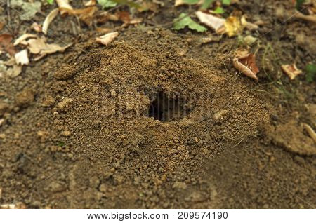 Hole in the soil ground animal in nature forest