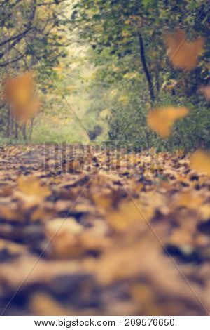 Blurred background of falling leaves. Autumn ladnscape. Fall in the forest